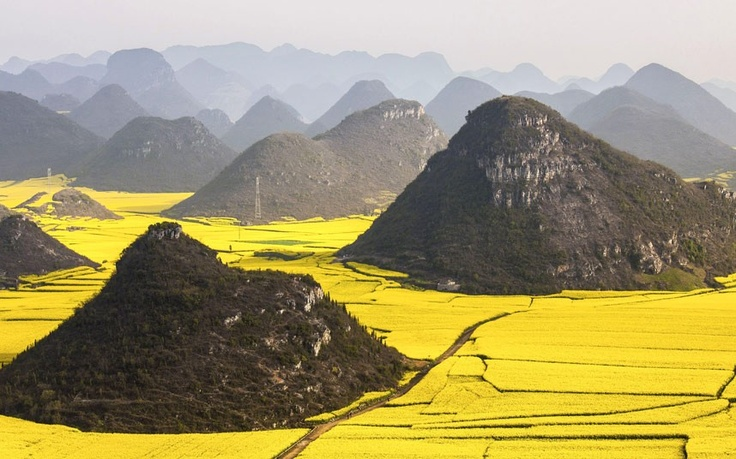 On a visit to Luoping in China Anne Berlin photographed these fields of rape seed nestling amongst the hills