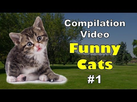 Funny Cats Compilation - Cute Cats Lovers Around the World -  #animals #animal #pet #cat #cats #cute #pets #animales #tagsforlikes #catlover #funnycats  Learn how to speak cat! Click HERE for the cat bible! Enjoy our video of dogs being cute, pictures of cats and babies, the naming of cats, cute cute cute cats, cute cat website, cute cat illustration,... - #Cats