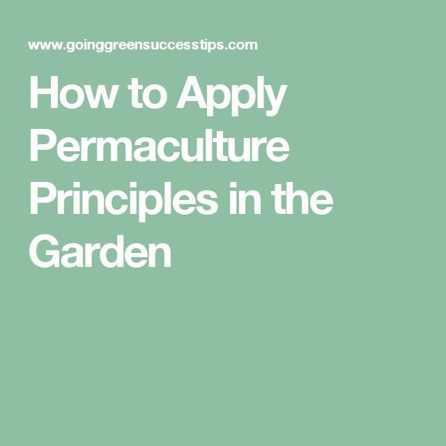 How to Apply Permaculture Principles in the Garden