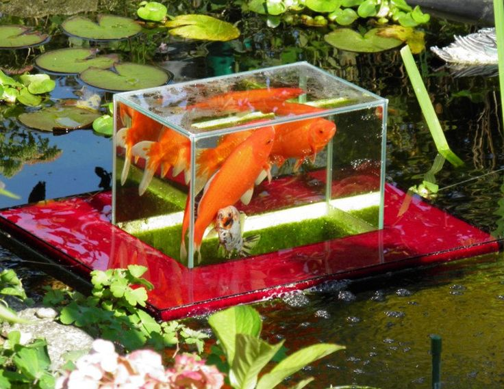 10 best aquariums images on pinterest fish tanks for Above water fish tank