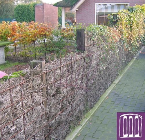 113 best images about screening ideas on pinterest gardens hedges and contemporary landscape - Hek begroeide ...