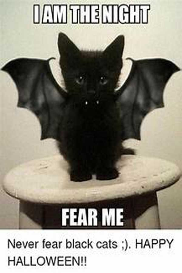 happy halloween meme for work 2020 , Download Awesome ...