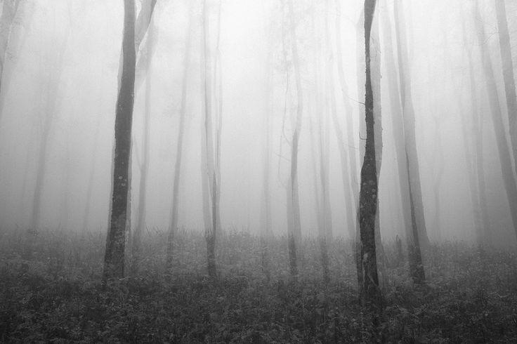 IMPRESSIONS - FORESTE CASENTINESI