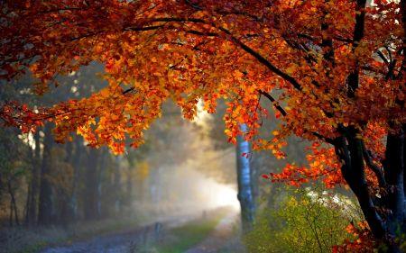 秋の霧 森 自然 高解像度で壁紙
