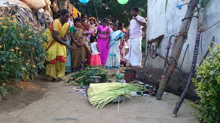 tamil mattu pongal photos, vedavakkam photos, vedavakkam images, vedavakkam, tamil pongal festival photos, tamil culture festival photos, tamil festival photos, tamil village photos, tamil village festival photos, vedavakkam facebook, vedavakkam twitter, vedavakkam festival photos, தமிழ் பொங்கல் புகைப்படங்கள், மாட்டு பொங்கல், தமிழ் மாட்டு பொங்கல், வேடவாக்கம் பொங்கல், கிராமம் பொங்கல், கிராம மக்கள் கொண்டாட்டம், மக்கள் பொங்கல் கொண்டாட்டம், வேடவாக்கம்