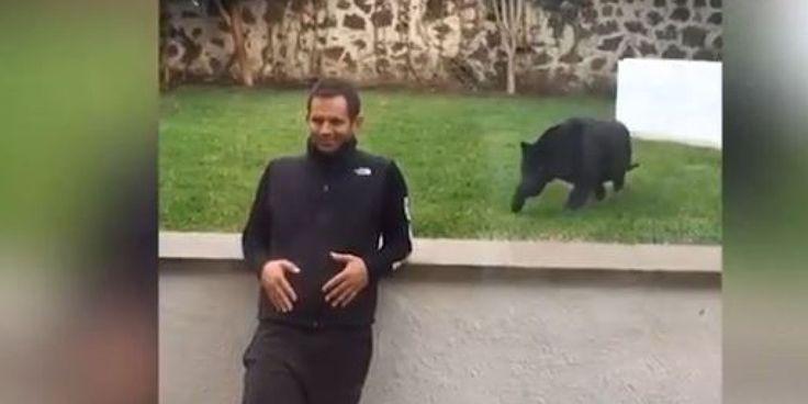 Appoggiato al muro di un recinto per animali, un uomo messicano sta parlando in spagnolo in tranquillità mentre una pantera nera  cammina di soppiatto dietro di lui. Sembrerebbe tendergli un ag