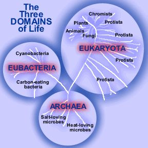 eubacteria definition Eubacteriaproteobacteriaegammaproteobacteria  the  phylum is defined by two major groups one photoautotrophic and the.