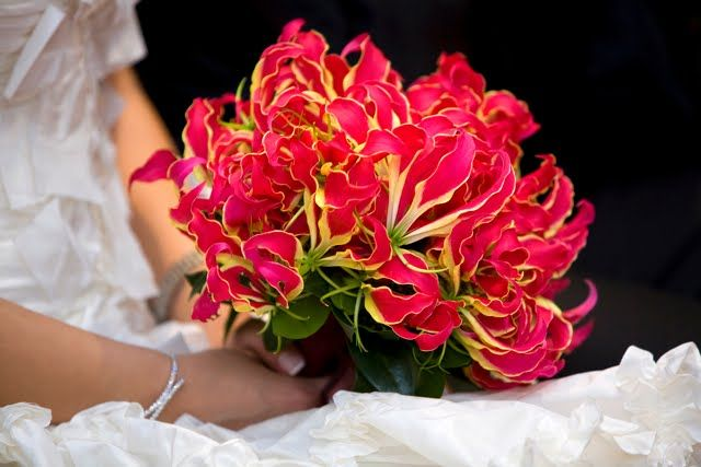 Gloriosa lilies - I Heart these! Used some in my wedding bouquet, expensive though!