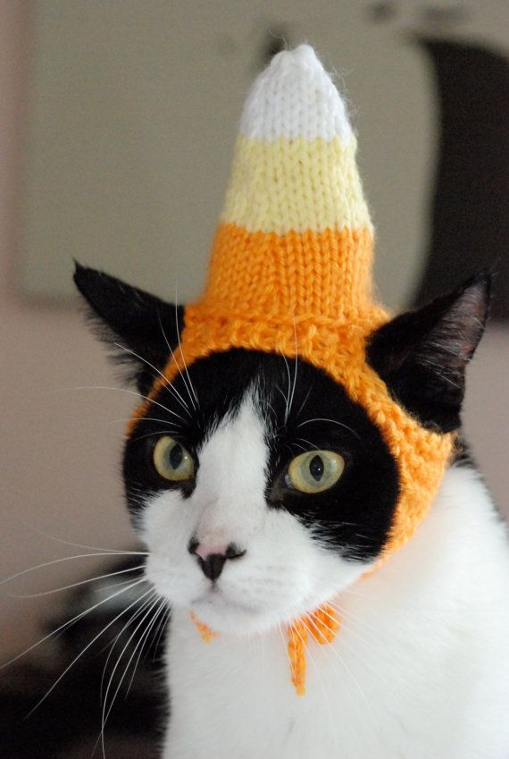 Candy corn cat hat.  Who would do this to their cat?!?!