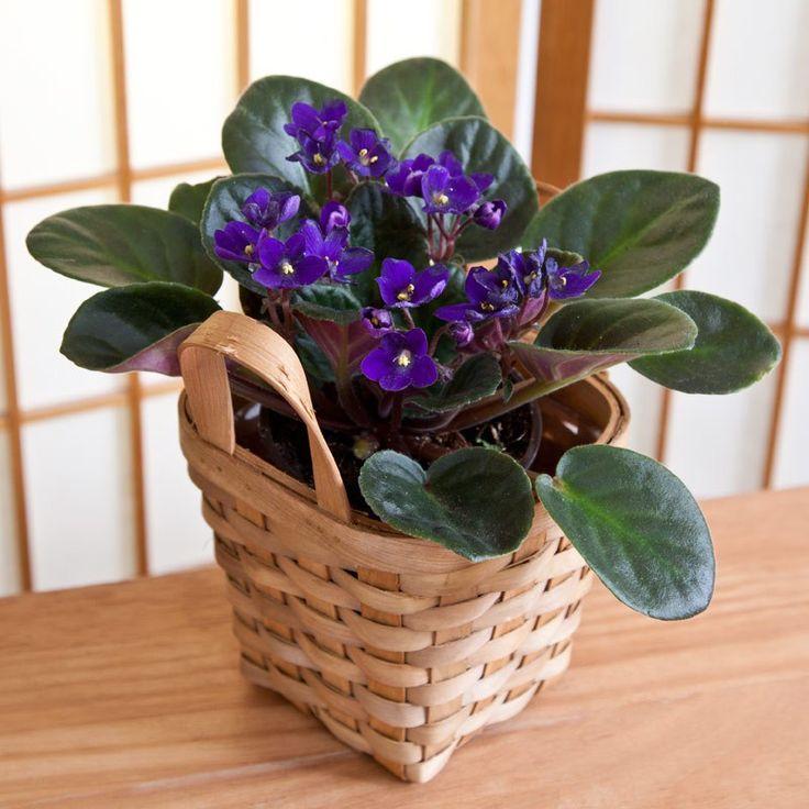 A természet úgy alakította a növényeket, hogy vannak köztük olyanok amelyek a napot szeretik, van amelyik az árnyékot szereti vagy a nedvesebb talajt, van amelyik kiválóan alkalmas a levegőben lévő káros anyagok kiszűrésére. Ebben a cikkünkben olyan növényeket is felsorolunk nektek, amelyek azt is kibírják ha nem törődnek velük. Így[...]