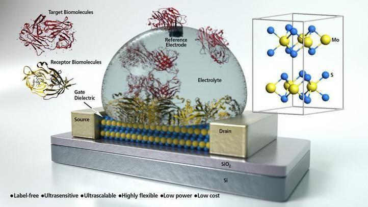 Scientists develop ultra-sensitive biosensor from molybdenite semiconductor material