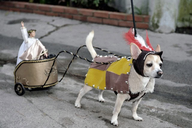 1000 images about carriage dogs on pinterest