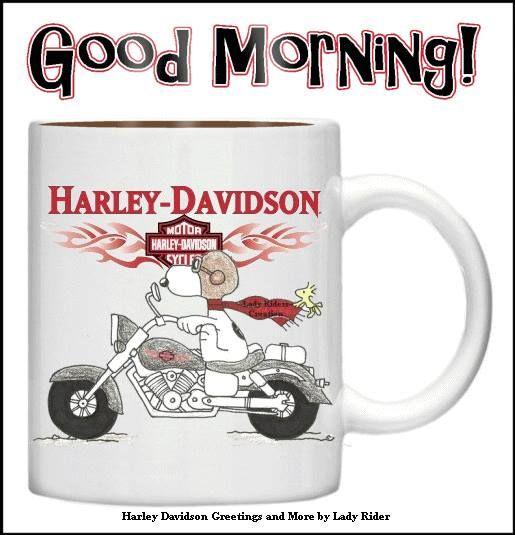 HARLEY Please Follow My New Board Harley