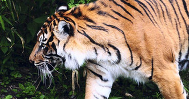 Lista de animales en peligro de extinción en la India. La India es el hogar de una población enorme de animales de diferentes variedades, muchos de los cuales se encuentran amenazadas o en peligro de extinción. La caza, la pérdida de hábitat y la desestabilización del ecosistema significa que muchos de los animales más emblemáticos de la India también están en peligro de desaparecer. De acuerdo con ...