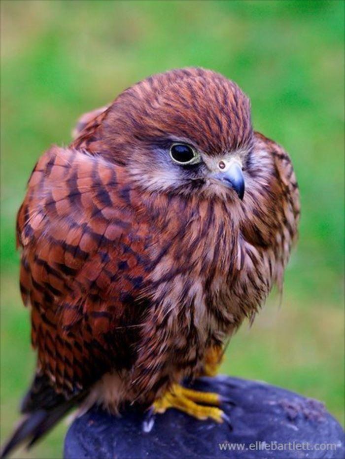 世界一可愛い鳥の種類ベスト50選 一覧 画像 ページ 3 Ailovei 可愛い鳥 珍しい鳥 ペットの鳥