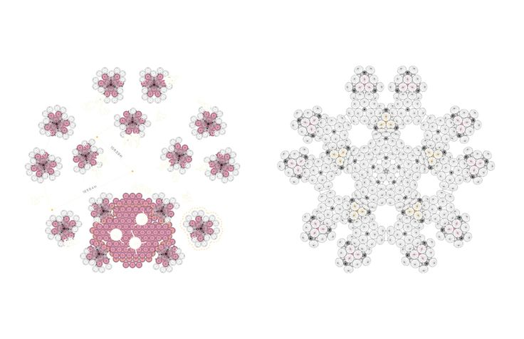 chinchilla_4.jpg (1000×647)