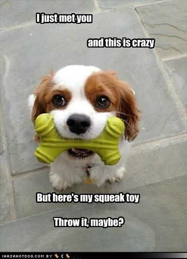 I just met you...and this is crazy, but here's my squeak toy...throw it, maybe?