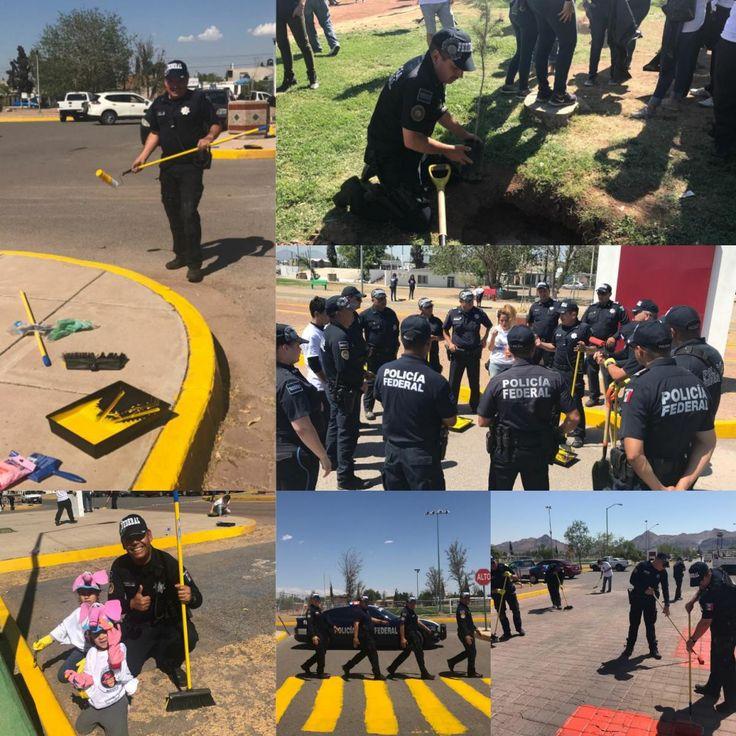 Se suma Policía Federal a reforestación y pintado de pasos peatonales del Parque Huerta Legarreta por el Día del Medio Ambiente | El Puntero