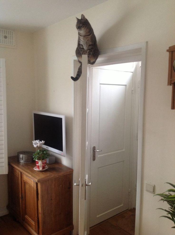 Ollie op de deur, mijn gekke kat
