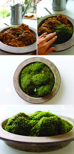 Make Your Own Moss Garden - I love the simplicity of this.