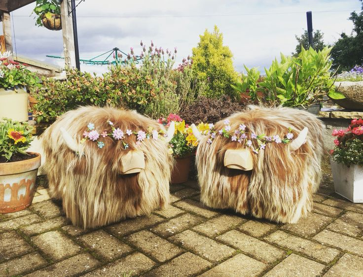 Highland cow footstools for sale on our website www.tweedyourself.co.uk