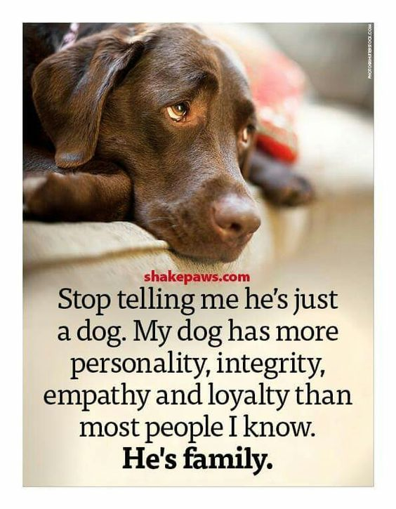 Dogs are family. I want to tell people they are  family.