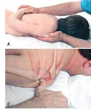 Basic Clinical Massage Therapy - Supraspinatus Attachment by tina66