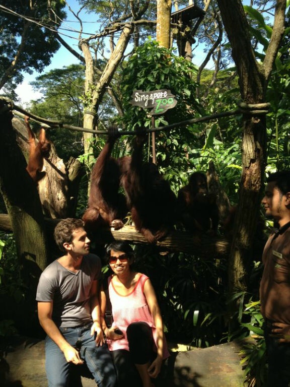 The Singapore Zoo. Surrounded by orangutans.Including a tall one wearing gray.