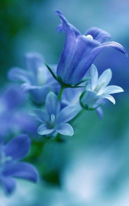 Blue Bell <3