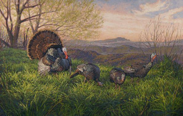 Grandfather Mountain wild Turkey painting by Ryan Kirby