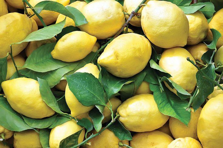GROWN BY THE MEDITERRANEAN SEA AND SUNSHINE | 뛰어난 향과 풍미로 세계인의 미각을 사로잡은 소렌토 레몬. 이탈리아 남부의 기름진 언덕을 텃밭 삼아, 넉넉한 햇살을 비료 삼아 노랗게 몸을 부풀린 소렌토 레몬은 지중해가 만들어낸 걸작이다. | Lexus i-Magazine 다운로드 ▶ www.lexus.co.kr/magazine #Lexus #Magazine #lemon