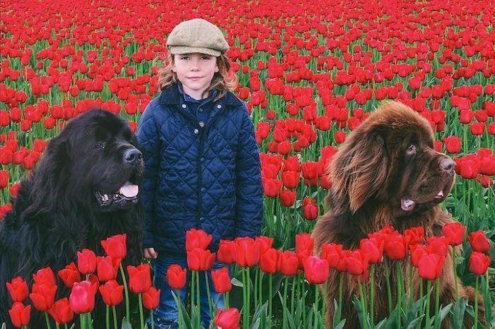 Когда друг настоящий, совсем не важно, что у него четыре лапы и хвост. Достаточно посмотреть на фотографии маленького мальчика и двух гигантских собак, чтобы понять, как им хорошо друг с другом. После таких фото хочется отправиться за щенком.