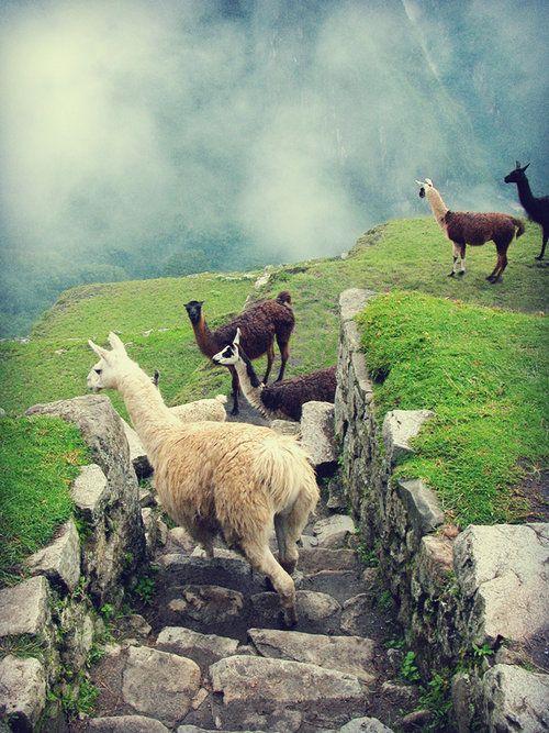 Lost in Machu Picchu