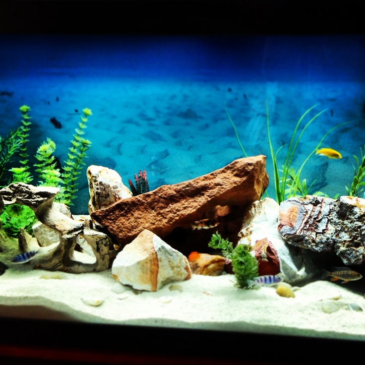 17 best images about aquariums decor on pinterest coral for African cichlid tank decoration