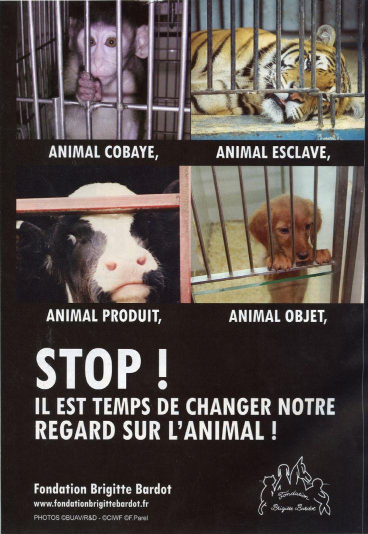 L'animal n'est ni un cobaye, ni un esclave, ni un produit, ni un objet. (Fondation Brigitte BARDOT)
