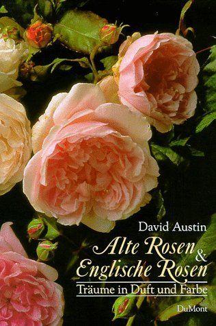 die 25 besten ideen zu alte englische rosen auf pinterest. Black Bedroom Furniture Sets. Home Design Ideas