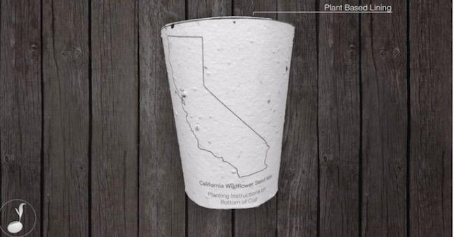 Tazza da caffè biodegradabile che diventa una pianta