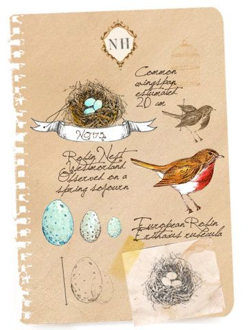 bird journal page...I wish I could see more of this artist's work.