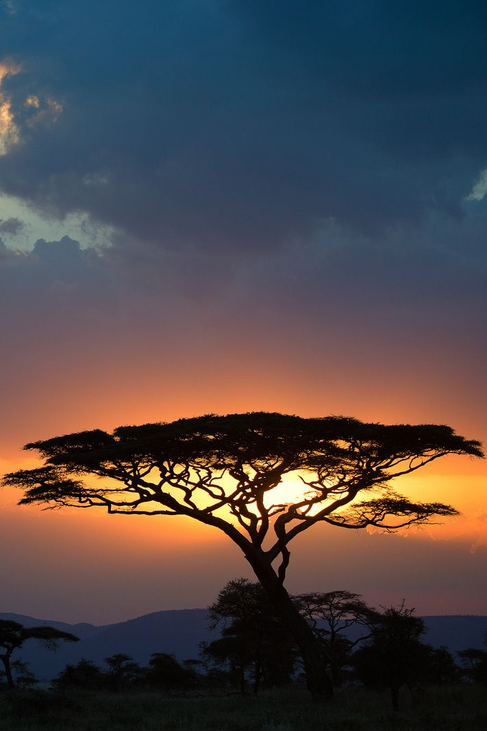 African Sunset, in the Central Serengeti, by John