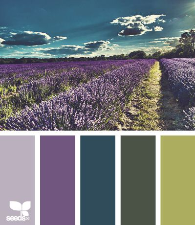 color inspiration - purple green and teal - design seeds