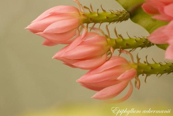Cactus arrows by ian atkinson