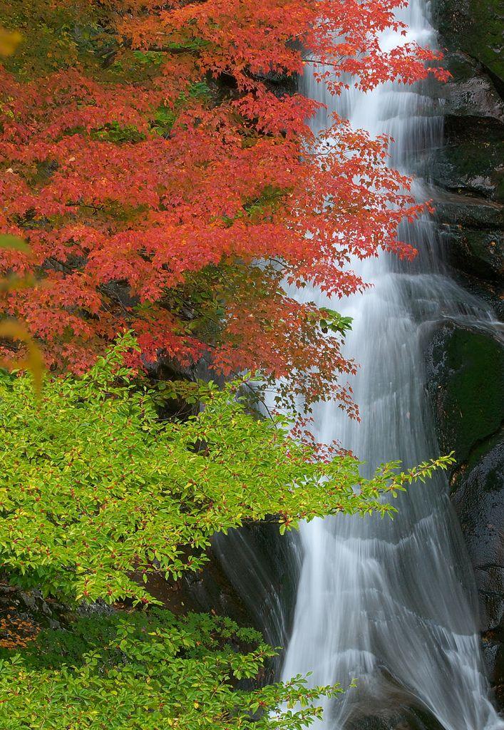葉の色が変わる瞬間。
