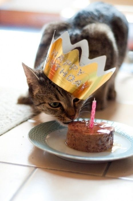 Take away the hat and the candle and this is what my cat thinks should happen every day!!