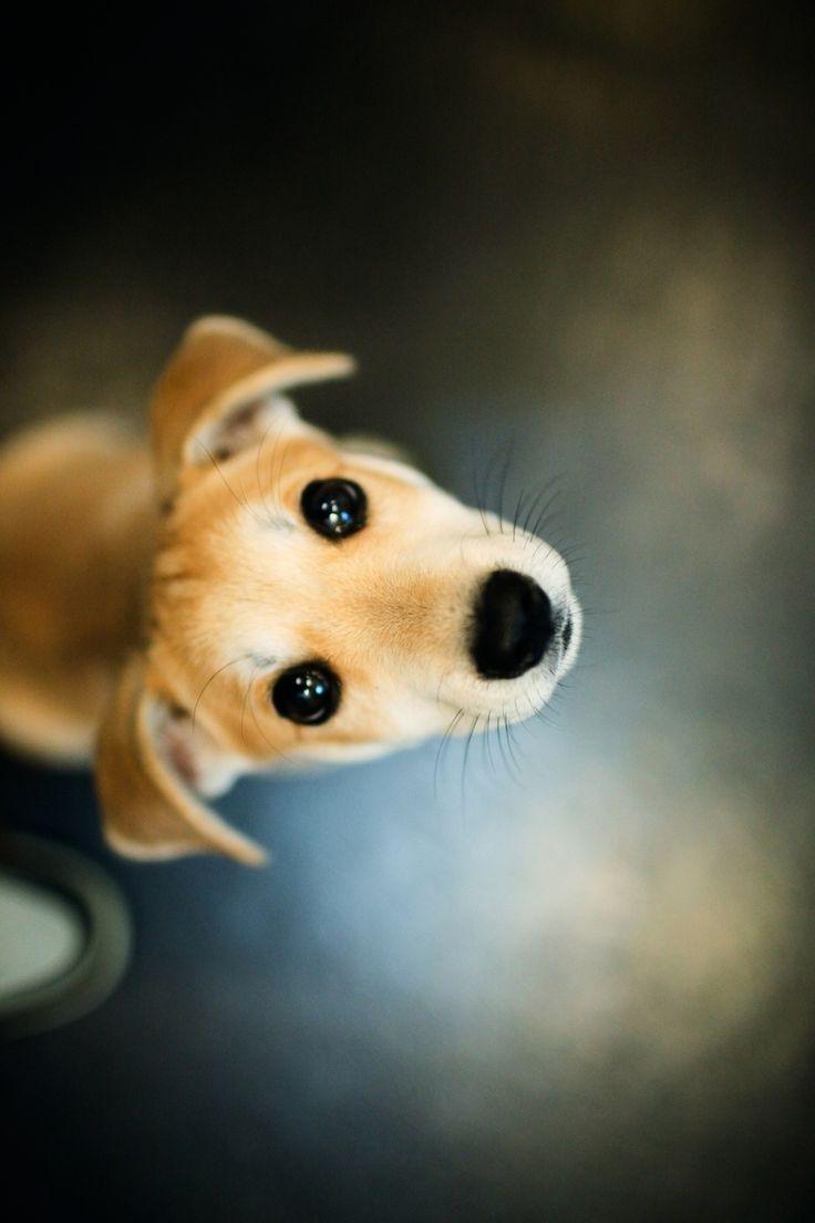 """Para que tengan una linda semana...""""Una de las miradas mas honestas de la tierra..la mirada de un perro"""" #perros #animales #amigales #mascotas Sophie, iSha & Guachi Guau, Muack & Miau"""