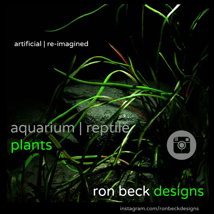 ron beck designs: instagram.  Get a first look at the newest aquarium plant and reptile plant designs from ron beck designs.  I'm Ron of Ron Beck Designs and I hand design-hand craft artificial aquarium decor plants, reptile plants and snake habitat plants.The plant designs are well crafted, life like and made of either plastic or silk. I use non toxic products. ronbeckdesigns.com #ron_beck_designs #aquarium #plant #decor #artificial #reptile #Reptile #Terrarium