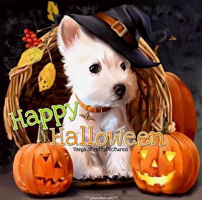 Halloween Bilder Lustig Halloween Bilder Frohliches Halloween Witzige Hundebilder