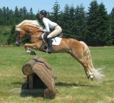 Haflinger Horses. well theres a goal