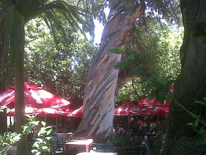 The Tea Garden in The Company Gardens. #thumbsup