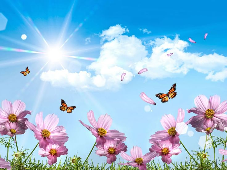 images of flowers and butterflies | flowers flowers wallpaper flowers hd wallpapers butterfly wallpaper ...