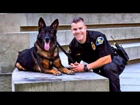 Police Dog Shot In Front Of His Partner–But Then A Miracle Happened!